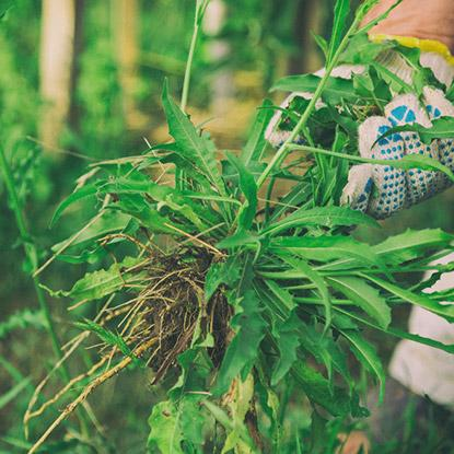 Techni-vert à Ohain - Désherbant Maubeuge, Fourmies